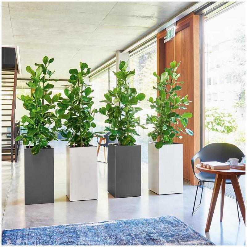 Lechuza Canto Premium Tower All inclusive set White High Gloss 40x40x76 cm