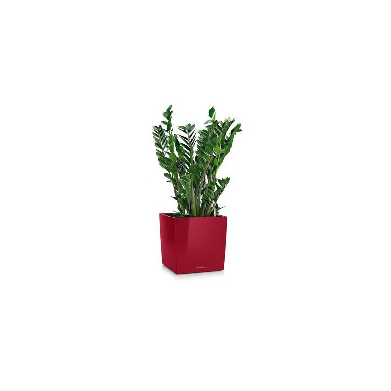 Lechuza Canto Premium Square Single planter Scarlet red High Gloss 40x40x41 cm