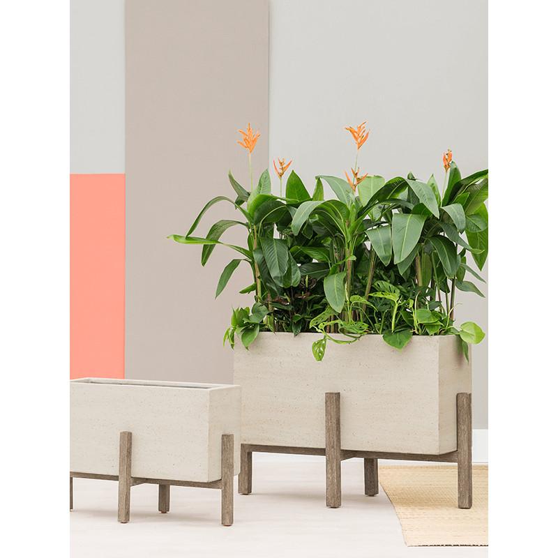 Heliconia Curacao Orange 17x60 cm