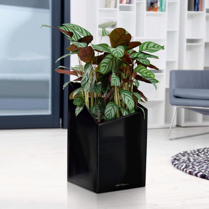 Lechuza Cursivo Premium Single planter black 40x40x67 cm