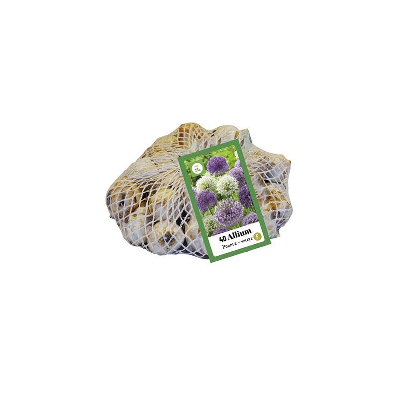 Okrasný cesnak fialové/biele kvetinové cibuľky Allium Nelton mix (sieťka 40 ks)
